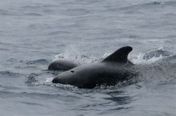 Photo:  NOAA/BOEM