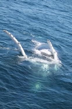 newburyport whale watch