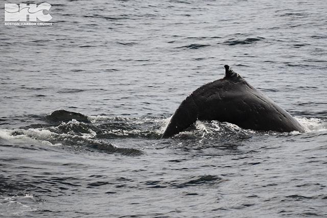 06-03-17 10AM Dimply whale TM DSC_0851.jpg
